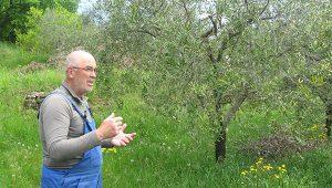 Gastrogurman - oljcno olje ronkaldo oljke 3