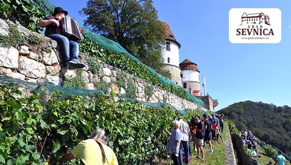 10. grajska trgatev na Gradu Sevnica