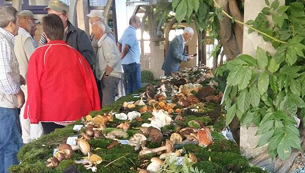 Razstava gob v Hotelu Sabotin: gobarje in kuharje letos razveseljuje bogata bera jurčkov