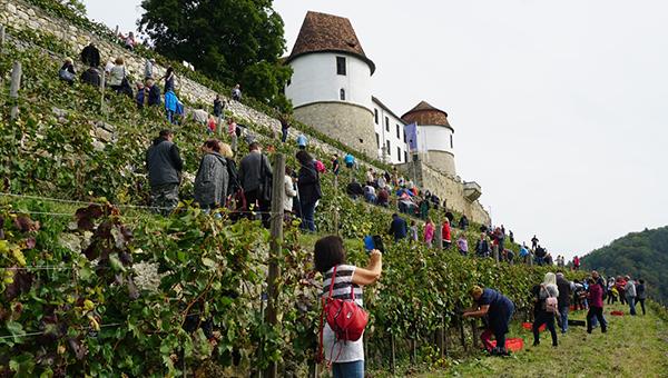 11. grajska trgatev na Gradu Sevnica