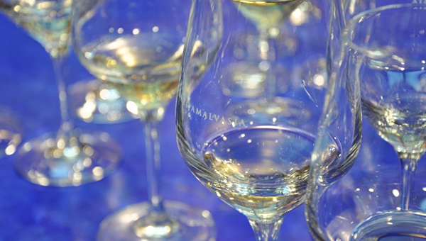 Festival Malvazija, žlahtni okus Mediterana bo ponudil več kot 170 vzorcev malvazij